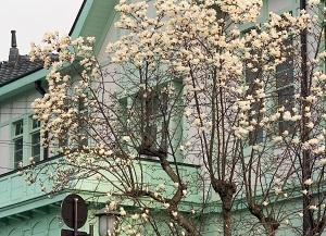 2000年頃旧栃木町庁舎.jpg