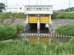 2013年5月25日杣井木川流入部2.jpg