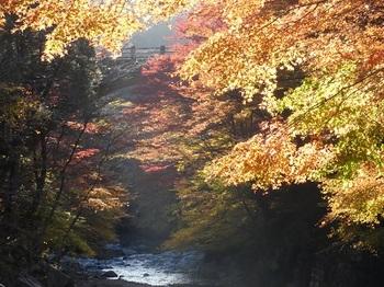 大芦渓谷の紅葉.jpg