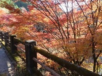大芦渓谷の紅葉2.jpg