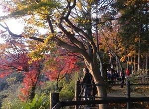 太平山の紅葉3.jpg