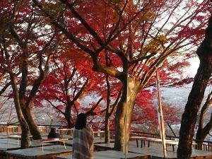 太平山の紅葉2.jpg