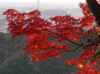 太平山の紅葉5.jpg