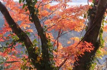 太平山の紅葉6.jpg