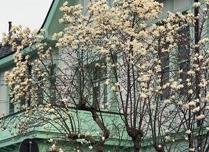 旧栃木町役場庁舎7.jpg