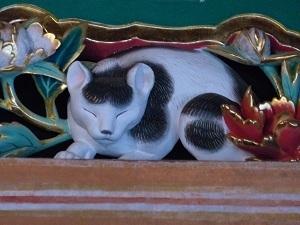 眠り猫.jpg