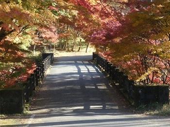 紅葉の中の白井平橋.jpg