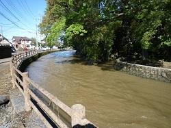 翁島脇を流れる巴波川.jpg